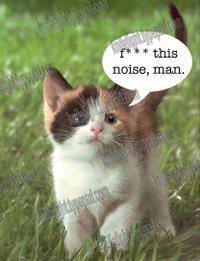 Kitten_watermark