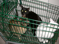 Shopping_cats_1